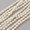 Natural Cultured Freshwater Pearl Beads Strands PEAR-G007-37-1